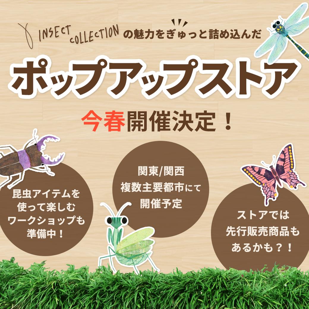 インセクトコレクション ポップアップストア今春開催決定!