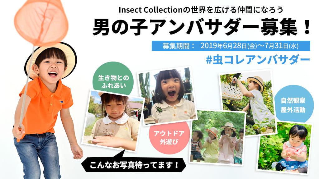インセクトコレクション男の子アンバサダー募集!