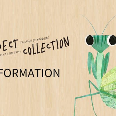 Insect Collection information